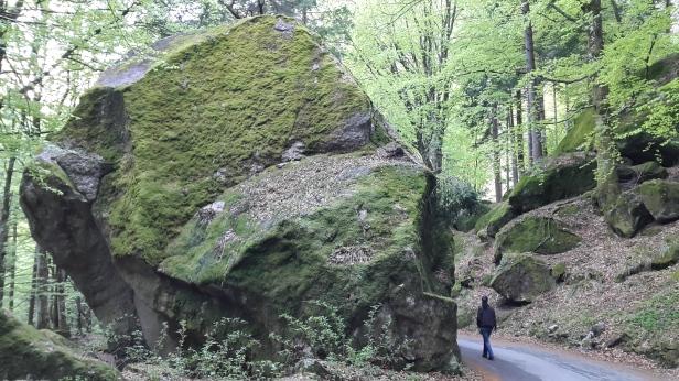 Foresta regionale Val Masino2